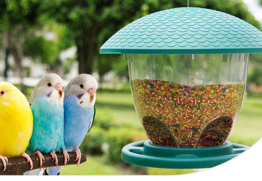 comederos-para-aves