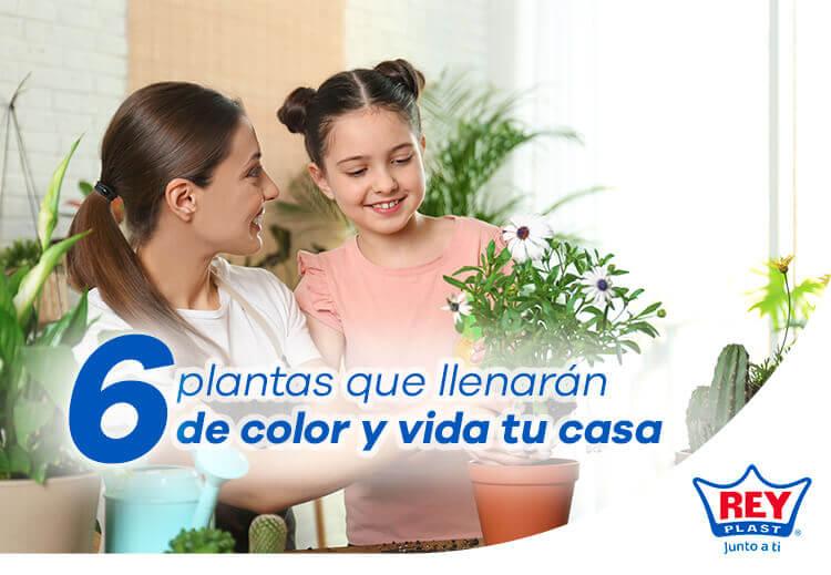 plantas-que-llenaran-de-color-y-vida-tu-casa-en-invierno