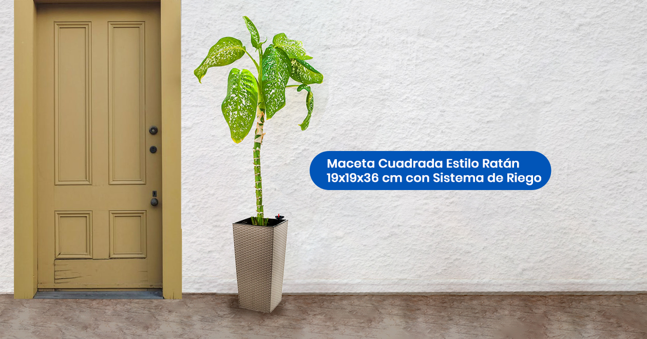 Crea-ambientes-frescos-con-plantas-altas